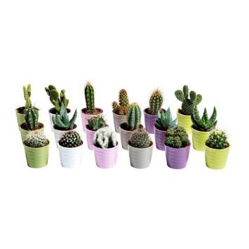 cactaceae-pianta-con-vaso__0159335_PE315851_S4